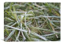 Frosty grass, Canvas Print