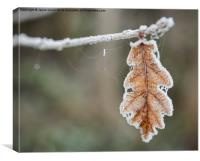 Frosted Leaf in Isolation, Canvas Print