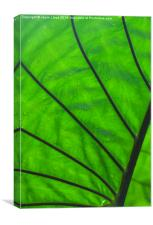 Wet green leaf, Canvas Print