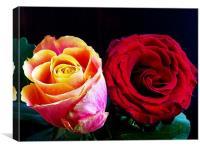 multicolo roses, Canvas Print