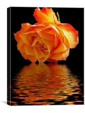 rose with the reflectios, Canvas Print