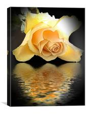 770-rose with thew reflections, Canvas Print