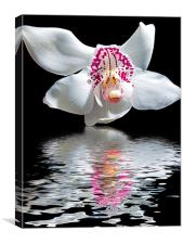 780-orchid with the reflections, Canvas Print
