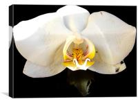 1091-beautiful orchid, Canvas Print