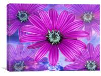 1628-purple flowers, Canvas Print