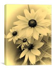 sepia flowers, Canvas Print