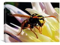 2250-bee on dahlia, Canvas Print