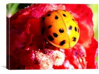 2527-lady bug, Canvas Print