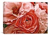 Bunch of Antique pink rose's, Canvas Print