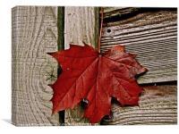 Autumn leaf just hanging around, Canvas Print