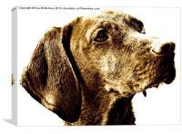 Vizsla dog breed, Canvas Print