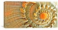 Sea Shell, Canvas Print