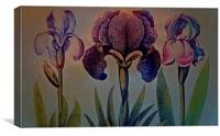 Three different Iris in a row, Canvas Print