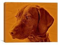 Amber the Vizsla dog, Canvas Print