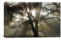 sun rays though the trees, Canvas Print