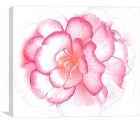 Pink bold flower, Canvas Print