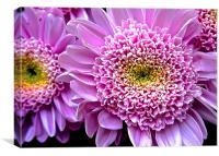 Bright Pink Gerbera Flower , Canvas Print