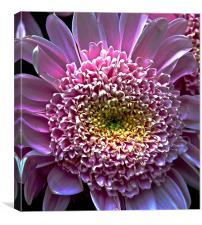 Bight Pink Gerbera Flower , Canvas Print