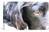 English Springer Spaniel. Breed of gun Dog, Canvas Print
