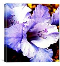 Purple Gladiolus Flower