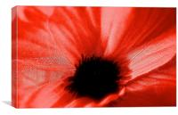 The Poppy Flower, Canvas Print