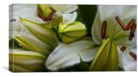 Open and Closed White Lilies, Canvas Print