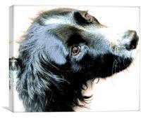 The English Springer Spaniel Dog, Canvas Print