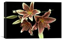Faded Stargazer Lilies , Canvas Print