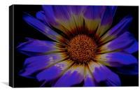 Summer Daisy, Gazania Flower, Canvas Print
