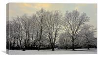Winter scene at the park                          , Canvas Print