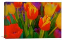 The meaning of Tulips                             , Canvas Print