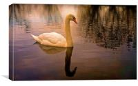 One Swan, sunset on water                         , Canvas Print