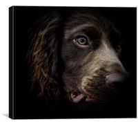 The face of seven month old English Cocker Spaniel, Canvas Print