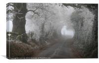 Cold Misty Lane, Canvas Print