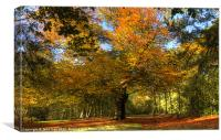 Beech Bundle tree, Canvas Print