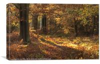 Beautiful woods Cannock, Canvas Print