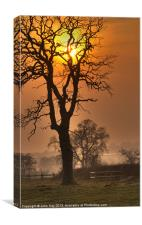 tree at sunset, Canvas Print