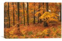 Forest Colour, Canvas Print