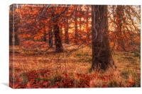 Forest Sunset, Canvas Print
