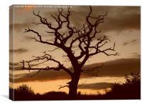 Dead Tree Cannock, Canvas Print