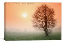 Misty morning in Cannock, Canvas Print