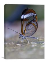 Crystal Wings, Canvas Print