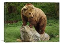 Brown Bear Standing, Canvas Print