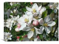 Apple Blossom Delight, Canvas Print