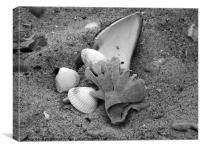 Seashell Shanty, Canvas Print
