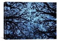 Evening Through the Branches, Canvas Print
