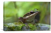 Common Greenback Frog, Canvas Print