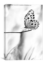 The Paper Kite Butterfly in B&W, Canvas Print