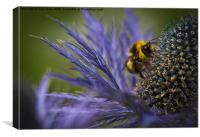 Busy Bee!, Canvas Print