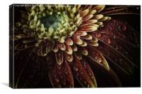 Macro photograph of Waterdrops on a Gerbera Daisy, Canvas Print